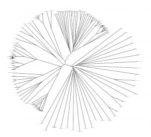 Drzewo filogenetyczne